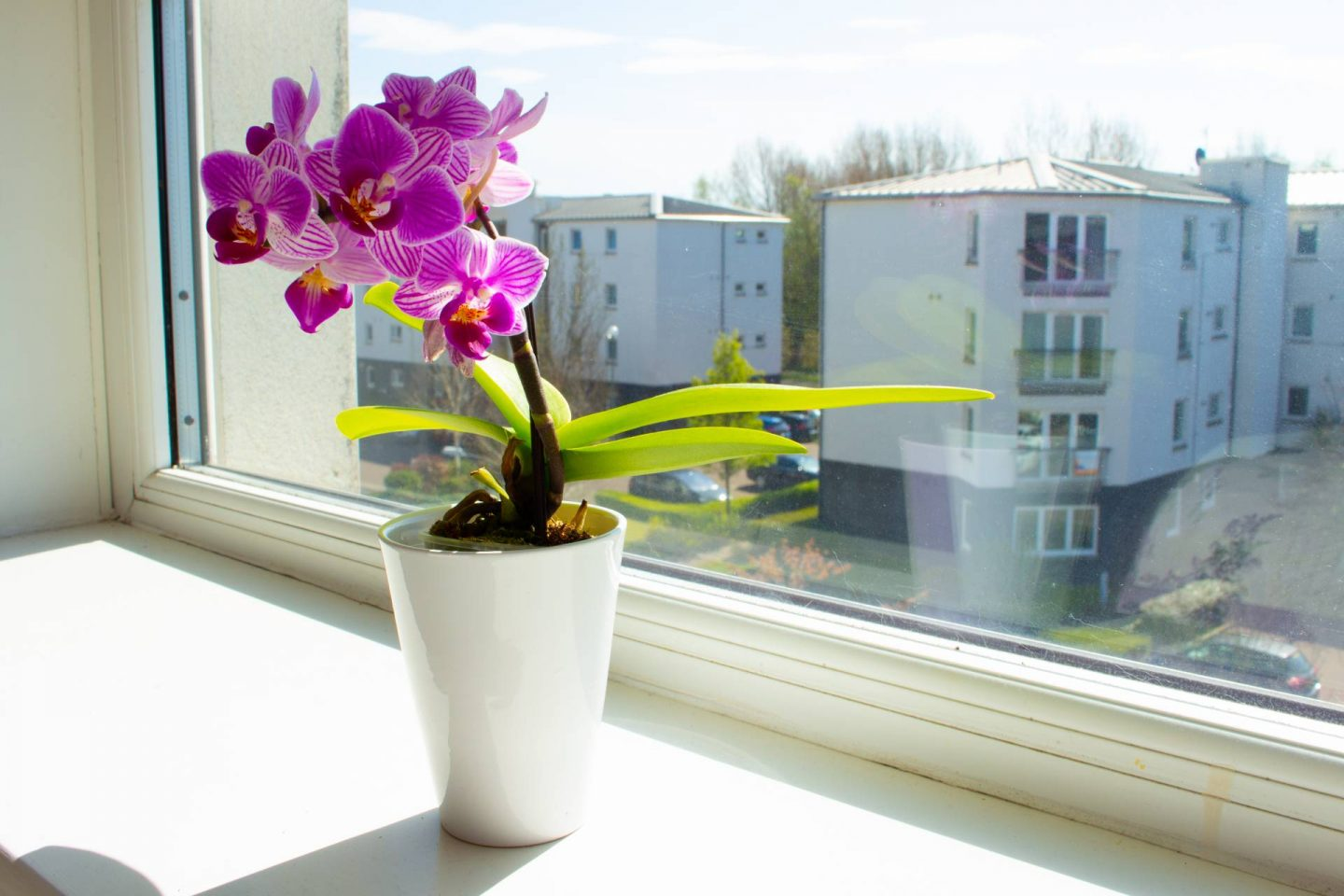 Orchid on window ledge